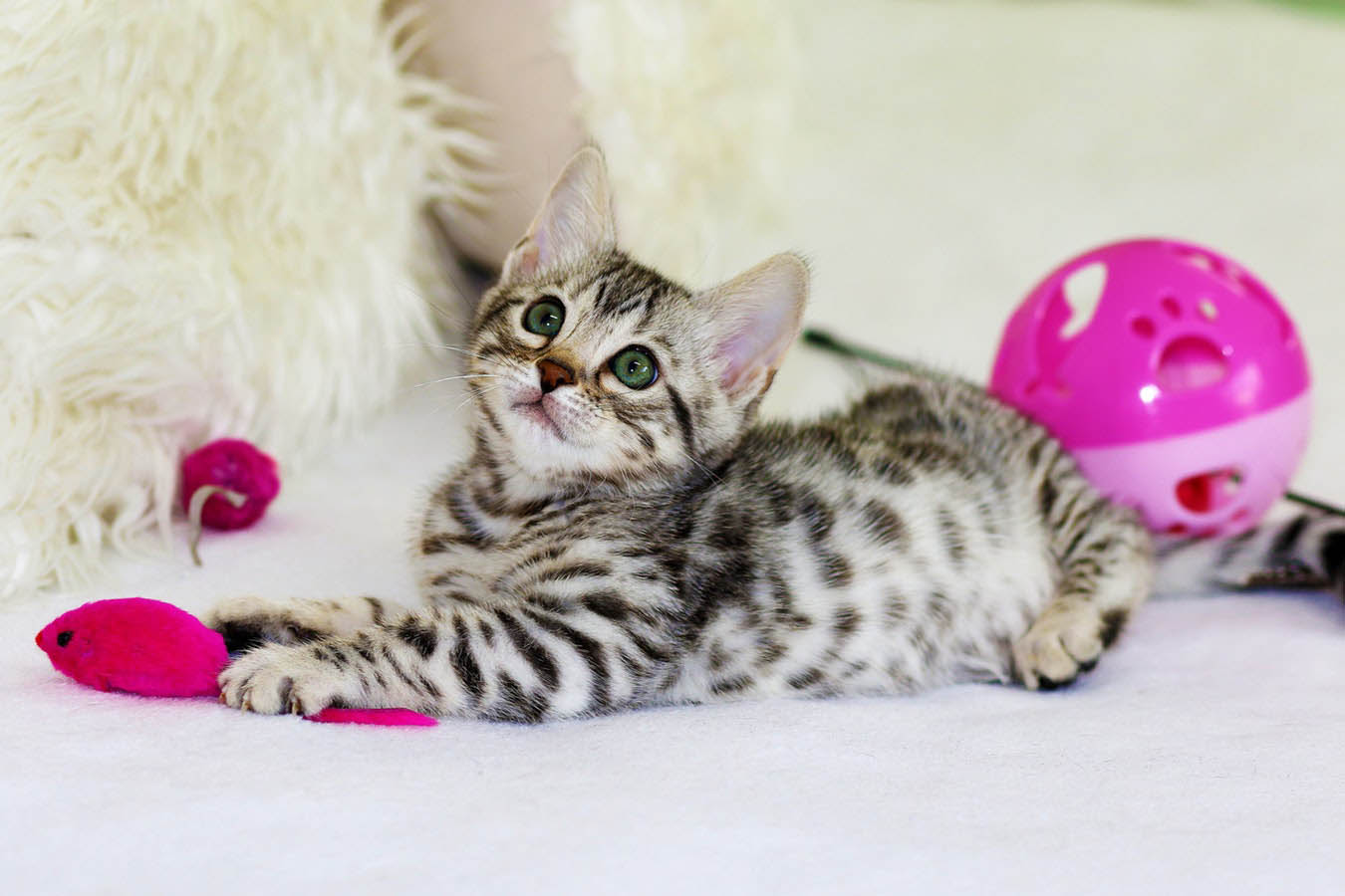 Cat Playing With Pink Toys