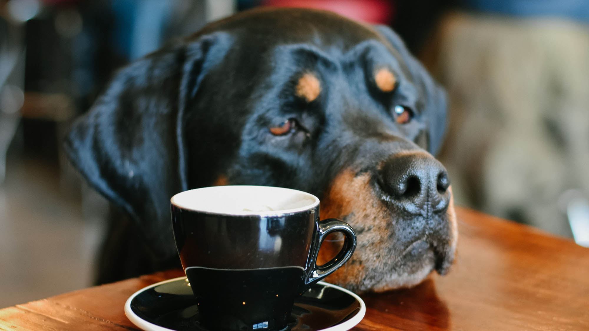 Dog Head on Table With Coffee Cup