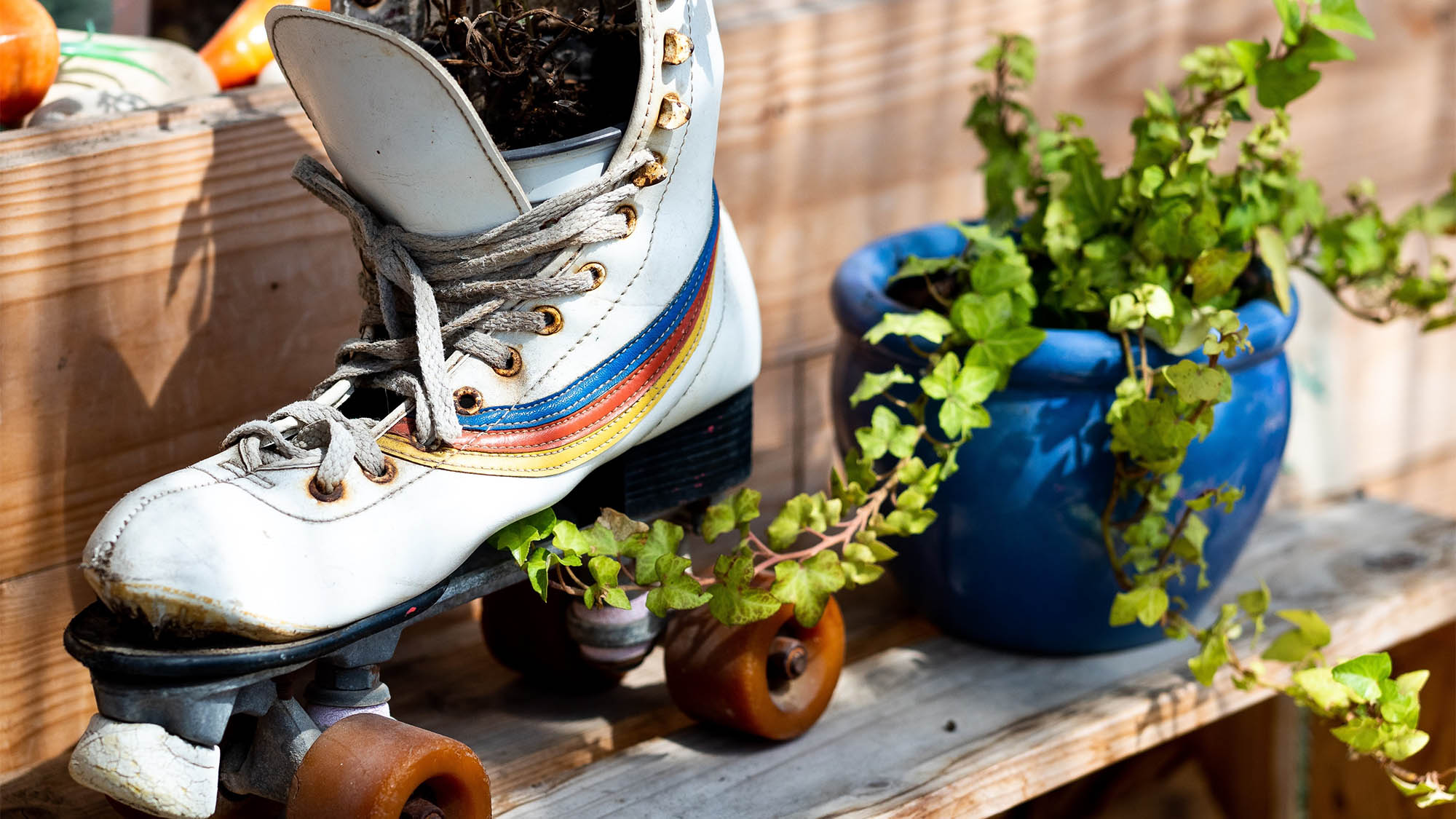Roller Skate Planter and Plants